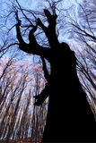 Ruf eines Baums Stockbild