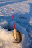 Ruff on ice fishing Royalty Free Stock Photo