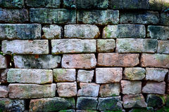 Ruffa mot tegelstenväggen Arkivbild