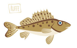 Ruffe, vector cartoon illustration Stock Photography