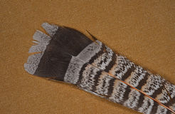 Ruffed grouse feather Stock Photo