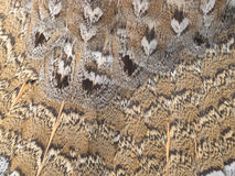 Ruffed grouse feathers nature pattern background Stock Photo