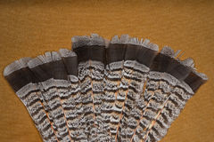 Ruffed grouse feathers Stock Photos
