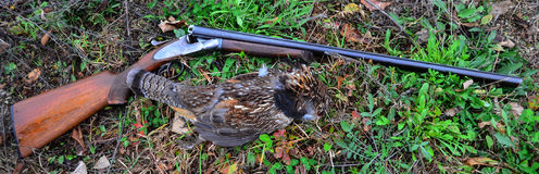 Ruffed grouse and vintage shotgun Stock Photography
