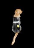 Rufferee - костюм Referree собаки Стоковое Фото