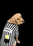 Rufferee - costume di Referree del cane Immagini Stock Libere da Diritti