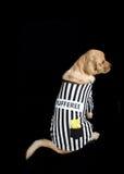 Rufferee - costume di Referree del cane Fotografie Stock Libere da Diritti