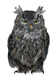 Ruffled old owl. An angry, ruffled old owl viewed from front illustration based on a hand drawing Stock Images