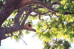 Rufous Hornero Nest Stock Images