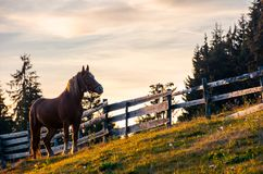 Rufous horse near the wooden fence. Beautiful evening scenery in golden light. forested countryside in mountains stock images