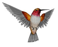 Rufous hummingbird - 3D render. Emerald hummingbird flying  in white background - 3D render Royalty Free Stock Photo