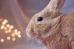 Rufous Kaninchen im weichen Hintergrund mit vielen bokeh Lichtern Lizenzfreie Stockfotografie