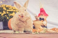 Rufus a coloré des supports de lapin parmi des décorations de chute Images libres de droits