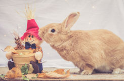 Rufus colored rabbit nudges fall scarecrow decoration Royalty Free Stock Photos