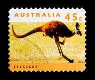 Rufus de Macropus de kangourou, serie rouges de kangourous et de koala, vers 1994 Photographie stock libre de droits