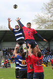 Rugby action - line out Stock Photography