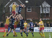 Rugby action. Rugby players pictured in action during the British and Irish Cup game between Bedford Blues and Scarlets Select on 23rd January 2016, at Royalty Free Stock Photos