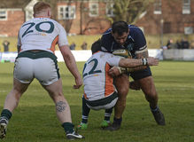 Rugby action Stock Images