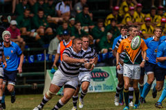 Player Forward Rugby Selborne Royalty Free Stock Photos