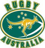 Rugby Australia kangaroo Stock Images