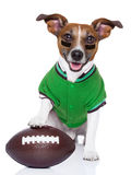 Rugby dog Royalty Free Stock Photos