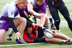 Rugby gracz ono zmaga się utrzymywać kontrola piłka podczas gdy przyczepia ziemia jego przeciwnikami zdjęcie royalty free