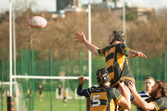 Rugby Line Out. Rugby player about to catch a Line Out ball during askeans versus edenbridge rugby union football clubs on Saturday the 23rd of March 2014 Royalty Free Stock Photos