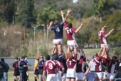 Rugby Lineout Royalty-vrije Stock Afbeeldingen