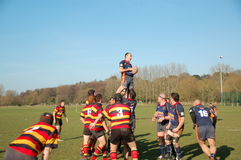 Rugby lineout Royalty Free Stock Photo