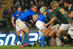 Rugby match Italy vs South Africa - Sergio Parisse Royalty Free Stock Photos