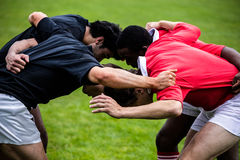 Rugby players doing a scrum. At the park Royalty Free Stock Photography