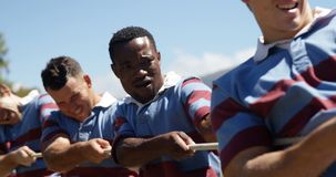 Rugby players playing tug of war 4K 4k. Rugby players playing tug of war in the field 4K 4k stock video footage