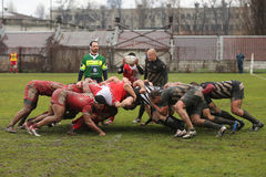 Rugby scrum. Rugby players fighting for ball during the match between Dinamo Bucharest and Universitatea Cluj in the Romanian Rugby National Championship Stock Photography