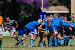 Spieler-Gedränge-halbes Rugby Nico-Malan Stockbilder