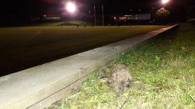 Rugbyfält för löst djur Fotografering för Bildbyråer