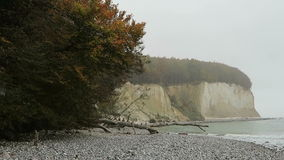 Rugen island chalk rock cliff landscape in autumn time. colorful beech tree forest. Mecklenburg-Vorpommern, Germany. Baltic sea.  stock footage