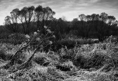 Ruggar av gräs i morgonfrost royaltyfria bilder