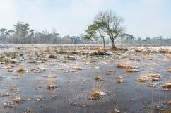 Ruggar av stora sävväxter i isen Royaltyfri Bild