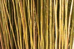 Rugge av bamburottingar för en bakgrund arkivbild