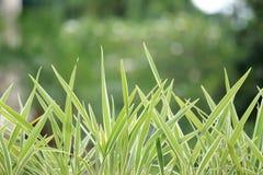 Rugge av gräs Fotografering för Bildbyråer