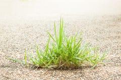 Rugge av gräs på golv på vit Royaltyfri Fotografi