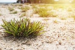 Rugge av gräs på sanden arkivbild