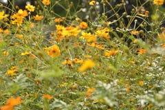 Rugge av tusenskönor i solen arkivbild