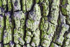 Rugged bark of a tree Stock Photos