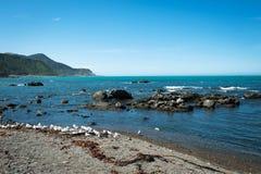 Rugged coastline of Kaikoura, New Zealand Royalty Free Stock Photos