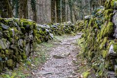 Rugged hiking path through thick forest covered in vines and plants and flanked by traditional old dry rock walls covered in lush. Moss near Ponte Brolla in the Stock Image
