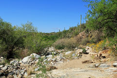 Rugged Hiking Trail in Bear Canyon in Tucson, AZ. Rugged hiking trail in Bear Canyon in Sabino Recreation Area Park in the Sonoran Desert along the Santa royalty free stock images