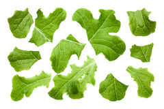 Rugged lettuce set Stock Images