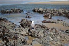 Rugged Oregon coast