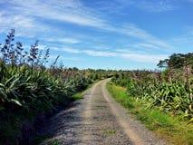 Rugged road through bush vegetation Stock Images